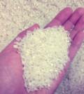 rice_sm