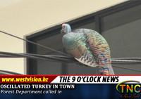 turkey_sm