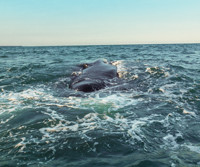 whale_sm