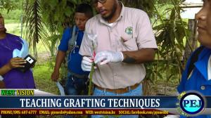 Grafting training