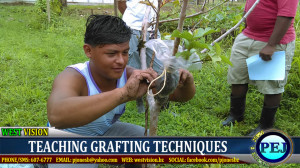Learning about grafting