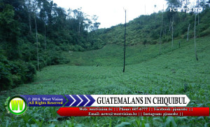 Corn field where Guatemalans were found